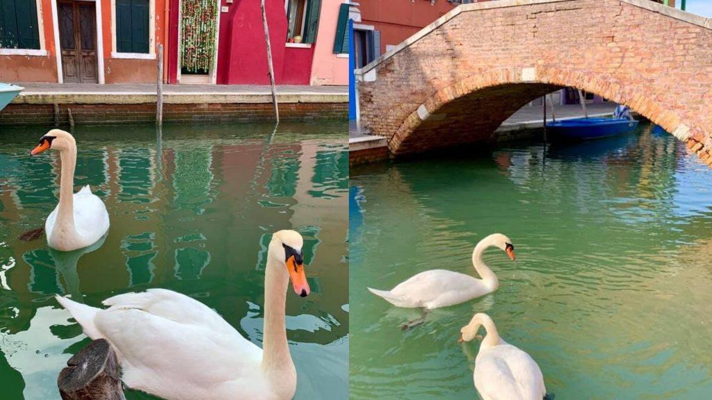 Canales en Venecia se limpian por cuarentena de coronavirus