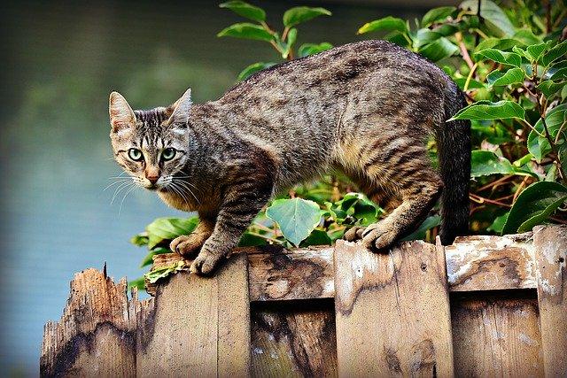 Gato-coronavirus-caso